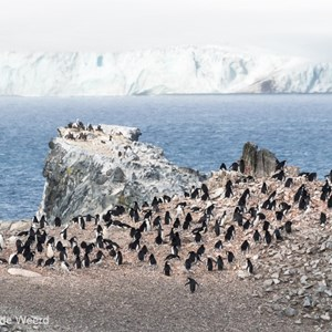2017-01-04 - Kolonie kinbandpinguïns<br/>Half Moon Island - South Shetland Islands - Antarctica<br/>Canon EOS 7D Mark II - 400 mm - f/8.0, 1/5000 sec, ISO 1250