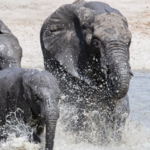 2015-10-17 - Olifanten stampede in het water<br/>Tarangire National Park - Arusha - Babati - Tanzania<br/>Canon EOS 7D Mark II - 420 mm - f/8.0, 1/500 sec, ISO 250