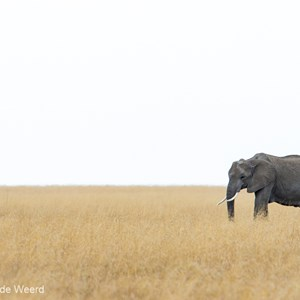 2015-10-20 - Olifant in de eindeloze vlakte<br/>Serengeti National Park - Tanzania<br/>Canon EOS 7D Mark II - 420 mm - f/5.6, 1/640 sec, ISO 320
