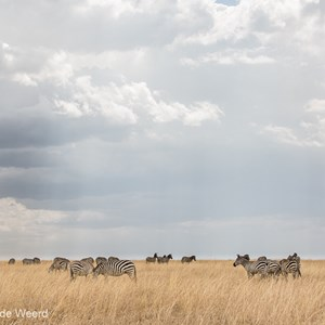 2015-10-20 - Streepjes in het gras<br/>Serengeti National Park - Tanzania<br/>Canon EOS 5D Mark III - 70 mm - f/8.0, 1/320 sec, ISO 200