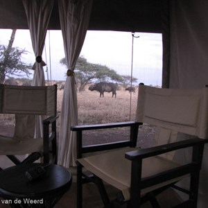 2015-10-22 - De buffels liepen vlak langs onze tent<br/>Serengeti Tortilis Camp - Serengeti National Park - Tanzania<br/>Canon PowerShot SX1 IS - 5 mm - f/2.8, 1/8 sec, ISO 400