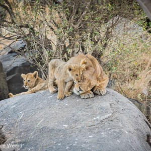 2015-10-21 - Mama doet net alsof ze in diepe slaap is<br/>Serengeti National Park - Tanzania<br/>Canon EOS 5D Mark III - 200 mm - f/5.0, 1/160 sec, ISO 400