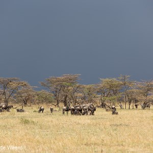 2015-10-22 - Slecht weer op komst<br/>Serengeti National Park - Tanzania<br/>Canon EOS 5D Mark III - 200 mm - f/5.6, 1/800 sec, ISO 200