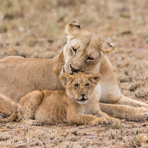 2015-10-23 - Wasbeurt<br/>Serengeti National Park - Tanzania<br/>Canon EOS 7D Mark II - 300 mm - f/4.0, 1/500 sec, ISO 1600