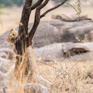 2015-10-23 - In de boom klimmen is nog niet zo makkelijk<br/>Serengeti National Park - Tanzania<br/>Canon EOS 7D Mark II - 300 mm - f/5.0, 1/250 sec, ISO 1000