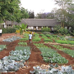 2015-10-24 - De moestuin van de lodge<br/>Ngorongoro Farm House - Karatu - Tanzania<br/>Canon PowerShot SX1 IS - 21 mm - f/4.5, 1/160 sec, ISO 160