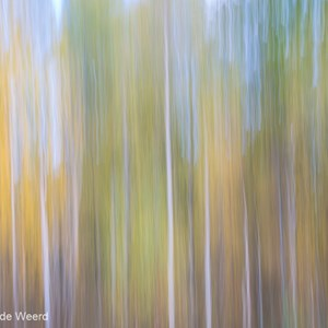 2016-10-19 - Creatief met bomen en herstkleuren<br/>Wandeling rond Cow Hill - Fort William - Schotland<br/>Canon EOS 5D Mark III - 70 mm - f/13.0, 0.5 sec, ISO 100