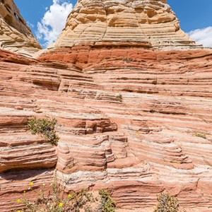 2014-07-17 - Met bloemetje<br/>White Pocket (Paria Canyon) - Kanab - Verenigde Staten<br/>Canon EOS 5D Mark III - 16 mm - f/11.0, 1/200 sec, ISO 100