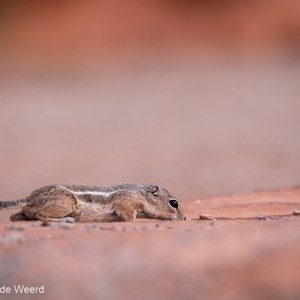2014-07-20 - Lekker een slokje water<br/>Valley of Fire State Park - Overton<br/>Canon EOS 5D Mark III - 165 mm - f/3.2, 1/2500 sec, ISO 800