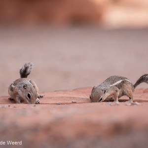 2014-07-20 - Samen een slokje drinken<br/>Valley of Fire State Park - Overton<br/>Canon EOS 5D Mark III - 200 mm - f/5.6, 1/200 sec, ISO 400