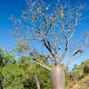 2011-07-23 - Baobab-boom<br/>Jinimum walk - Keep River National Park - Australië<br/>Canon EOS 7D - 24 mm - f/8.0, 1/250 sec, ISO 200