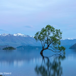 2018-12-07 - That Wanaka tree vóór zonsopkomst<br/>That Wanaka Tree (Lake Wanaka) - Wanaka - Nieuw-Zeeland<br/>Canon EOS 5D Mark III - 57 mm - f/16.0, 13 sec, ISO 100